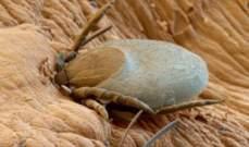حشرات مميتة تضرب الدماغ تهدد كأس أمم أوروبا الصيف المقبل