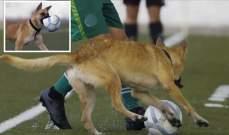 موقف طريف.. كلب يقتحم مباراة في تونس ويخطف الكرة من اللاعبين ويتلفها