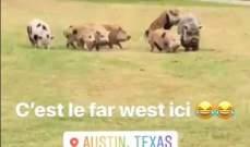 بيار غازلي مبهور بالخنازير البرية