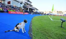 قطة تحل ضيفة على مباراة مصر وجنوب افريقيا