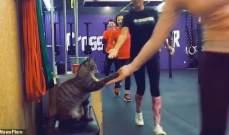 قطة تحيي الرياضيين داخل نادي رياضي