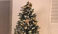 كاين يزين شجرة الميلاد بالحذاء الذهبي