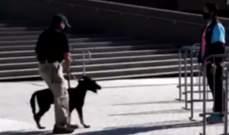 الكلاب ستساعد ميامي هيت على اعادة الجماهير الى المدرجات