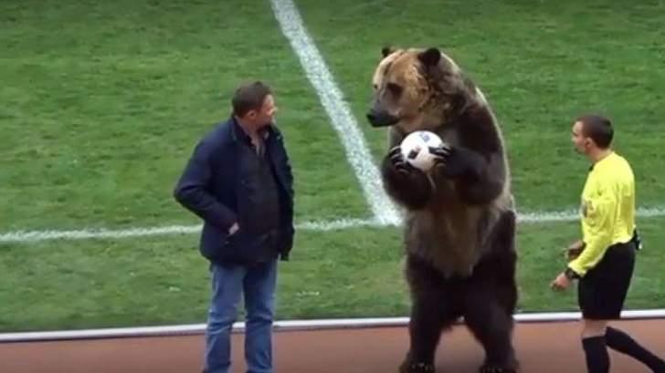فيديو: دب يفاجئ الجماهير في الملعب