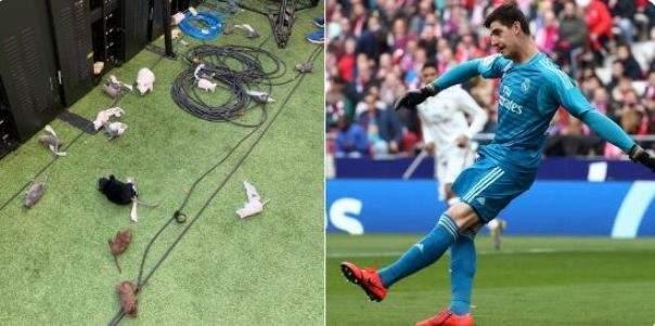 كورتوا سعيد بالفوز وغير مكترث بأفعال جماهير اتلتيكو مدريد